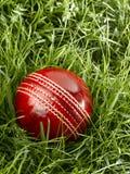 cricket floodlit royaltyfri foto