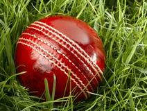 cricket floodlit arkivfoto