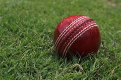 Cricket Floodlit Photos libres de droits
