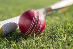 cricket floodlit fotografering för bildbyråer