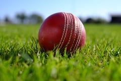 cricket floodlit arkivbilder