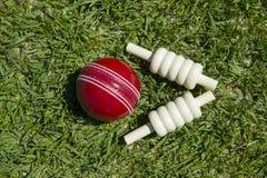 cricket floodlit arkivfoton