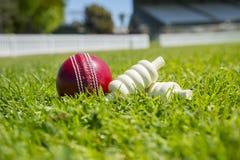 Cricket Floodlit Images stock