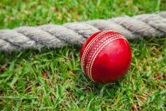 cricket floodlit Royaltyfri Bild