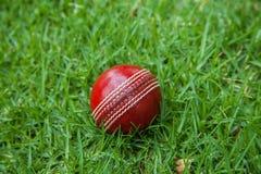 cricket floodlit 免版税库存照片
