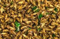 Cricket frit Image libre de droits