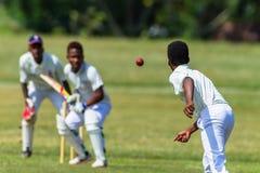 Cricket Action Bowler Ball Batsman Royalty Free Stock Image