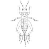 Cricket. grig. Gryllus campestris. vector illustration