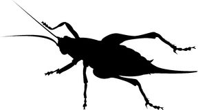 Cricket insect silhouette Royalty Free Stock Photography