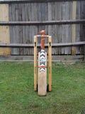 Cricket nel giardino di estate Immagine Stock Libera da Diritti