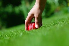 cricket piłkę Obrazy Royalty Free