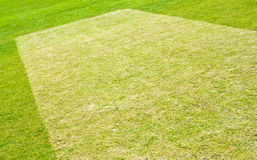 Cricket pitch preparation Royalty Free Stock Photo