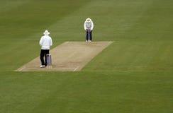 cricket sędziowie obraz stock