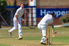 Cricket slaglängden för kastareBatsmanbollen   Royaltyfri Bild