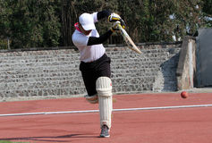Cricket Stock Image