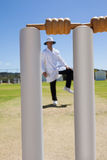 Cricket stumps against referee standing at field stock image