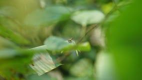 Cricket sur une feuille verte entourée par les feuilles vertes Photos stock