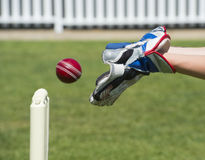 Cricket wicket keeper. Catches the ball Royalty Free Stock Photos