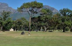 Cricketplatzwächter lizenzfreies stockbild