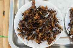 Crickets fried in white dish. royalty free stock photo