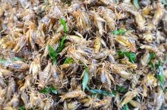 Crickets frits Photos libres de droits