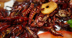 Crickets, grasshoppers served with garlic Stock Images