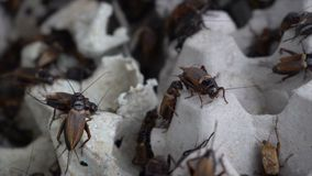 Crickets in industrial farm stock footage