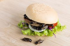 Free Crickets Insect For Eating As Food Items In Bread Burger Made Of Fried Insect Meat With Vegetable On Wooden Table It Is Good Royalty Free Stock Photo - 139383385