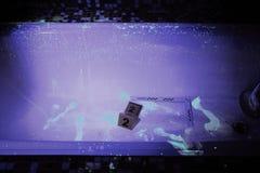 Crime scene under UV light Stock Photography