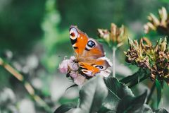 Butterfly sitting on a flower in the gardens of Crimea Stock Photography