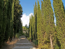 Crimea. The cypress avenue in Yalta Royalty Free Stock Photos
