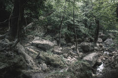 Crimea - Forest. Dark forest in Crimea neer the waterfall royalty free stock photography