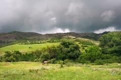 Crimea landscape Stock Image