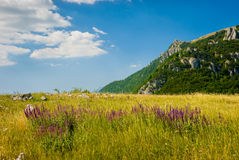 Crimea mountains. Summer mountain landscape in Crimea, Ukraine Royalty Free Stock Photos