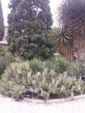 crimea Nikita Botanical Garden Image stock