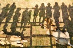crimea Parco dei leoni 24 agosto 2018 Ombre della gente che guarda l'alimentazione dei leoni sul permesso su di osservare le piat fotografia stock