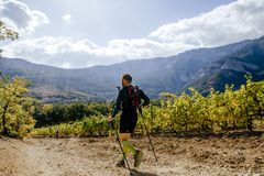 Man runner athlete running on sun valley vineyard. Crimea, Russia - October 13, 2017: man runner athlete running on sun valley vineyard during Crimea Х Run Stock Photos