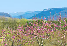 Crimea in spring Stock Photography