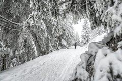 crimea wieczór podwyżki portreta promienie sun Ukraine zima Fotografia Royalty Free