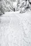 crimea wieczór podwyżki portreta promienie sun Ukraine zima Fotografia Stock