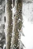 crimea wieczór podwyżki portreta promienie sun Ukraine zima Obrazy Stock