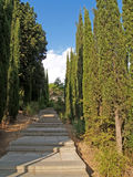 Crimea, Yalta. The cypress avenue in park Royalty Free Stock Image
