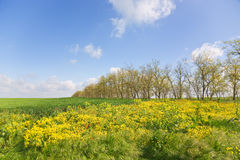 Crimea, yellow glade Royalty Free Stock Photography