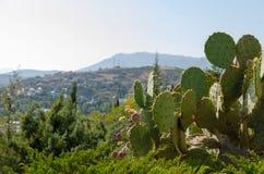 Crimean coast. Cacti. Royalty Free Stock Image