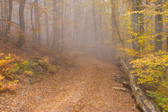 Crimean deciduous forest at misty autumnal day Royalty Free Stock Photography