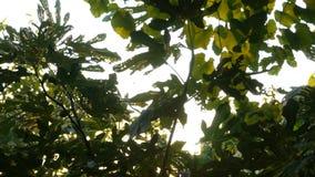 crimean Il sole splende tramite le foglie di un albero fotografie stock libere da diritti