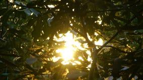 crimean Il sole splende tramite le foglie di un albero fotografie stock