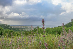 Crimean mountains, plateau. Summer 2011 Royalty Free Stock Images