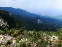In the Crimean national park. Savage flowers even grow at the edge of the depth in Crimean mountains stock photo