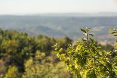 Crimean nature Stock Image